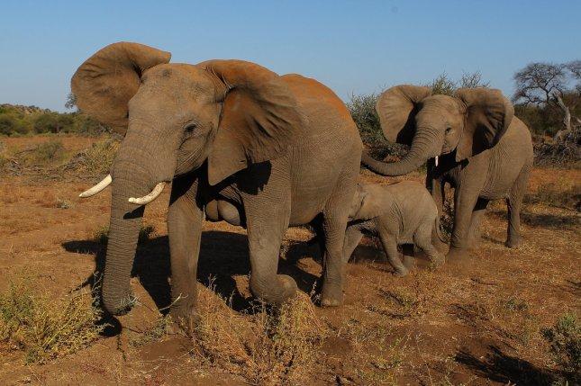 The Wonderful Elephant